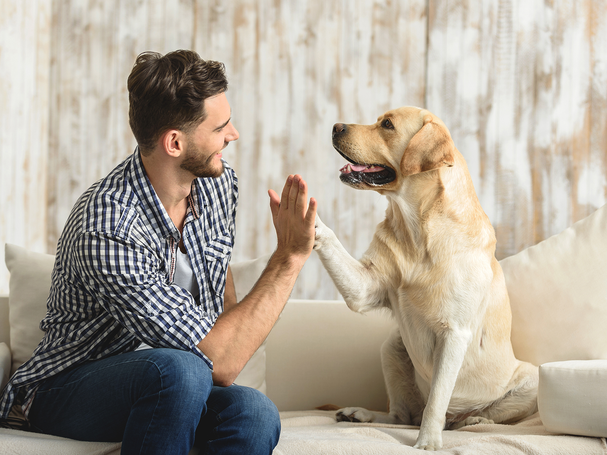 CBD Chews For Dogs: Helping Your Best Friend Be A Better Friend