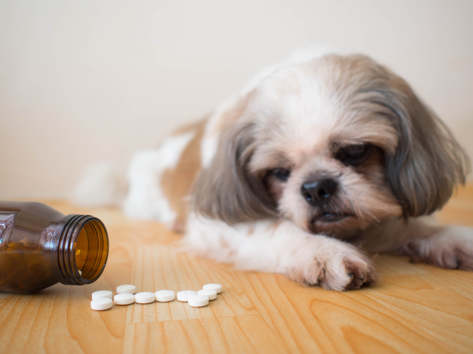 Choosing the Best Dog Supplements for Your Canine Companion